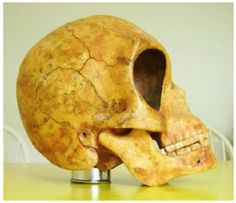 Ancient Alien Skull Photos RELEASED, Carbon dated at 1200 AD. Discovered 2007 in Denmark in a neolithic site. skull: one and a half times larger than a male Homo sapiens  l'Ordre Lux Pégasos ???  Author: Scott C. Waring