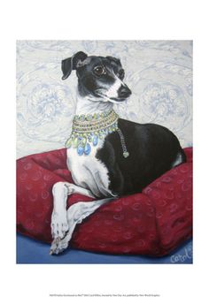 Italian Greyhound on Red by Carol Dillon. Print from Art.com, $19.99