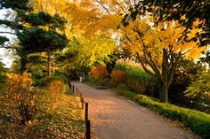 An October Fall-Color Tree Walk | Chicago Botanic Garden - Stroll through a public garden to take in the autumn colors and find inspiring plants to add to your home garden.