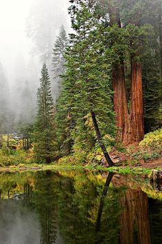 Redwood Pond, California