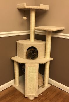 We had a long serious talk before the new cat tree arrived about how it's for felines only.