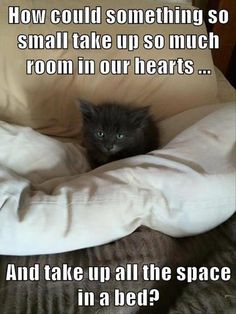 How could something so small take up so much room in our hearts... And take up all the space in a bed?