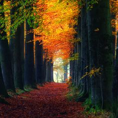 Forests by J-W | Step by step...