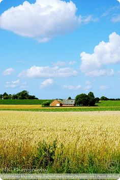 Denmark - typical summer view