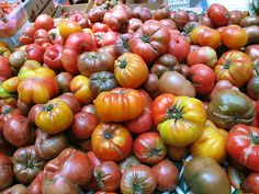 Growing Heirloom Tomato Plants - http://www.ecosnippets.com/gardening/growing-heirloom-tomato-plants/