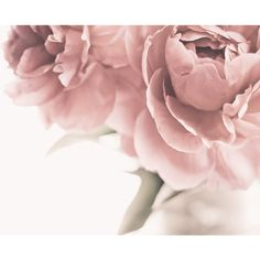 Peonies Photo Peonies Print, Floral Photography, Floral Print, Black... ($39) ❤ liked on Polyvore featuring backgrounds