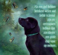 Beautiful Lyrics, Beautiful Words, Dutch Words, Respect Quotes, Ga In, Black Labrador, Grumpy Cat, Dog Quotes, Happy Thoughts