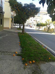 Entrada por el Este de Madrigal de la Vera por la carreteta que viene de Candeleda, Avila. Un paseo entre naranjos nos recibe.  Estamos en el primer Pueblo de la Vera, Caceres, Extremadura.