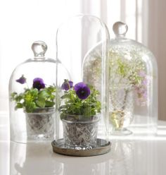 Love : flowers, cloche, crystal pots!