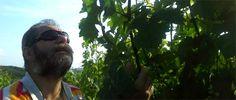 A szürkebarát narancs bora