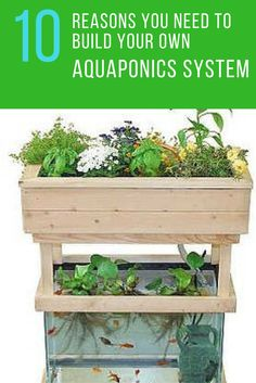 Did you know that an aquaponics system could feed your whole family? Check out these 10 Reasons Why You Need to Build Your Own Aquaponics System at Home. | Ideahacks.com