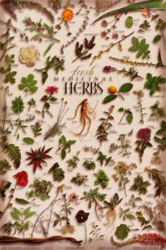 Medicinal Herbs Chart | Herb Chart - Herbal Teas & Culinary Herb Charts - Lots of styles to ...Another beautiful gardens of healing herbs .have lots of them in my herbs in my beautiful gardens.