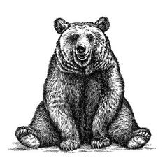 Picture of engrave isolated bear illustration sketch. linear art stock photo, images and stock photography. Bear Illustration, Engraving Illustration, Illustration Sketches, Free Illustrations, Wojtek Bear, Bear Sketch, Tribal Bear, Linear Art, Bear Drawing