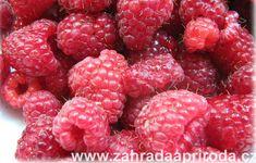 maliny jsou cenným zdrojem vitamínů a antioxidantů, foto med Med, Raspberry, Fruit, Compost, Raspberries