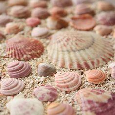 Such Pretty Collection of Sea Shells ~ Pink Beach, Pink Summer, Ocean Beach, Summer Time, Summer Days, Beach Waves, Summer Fun, Sea Creatures, Strand