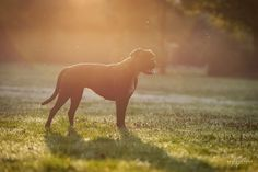 Portrait at Sunrise by Kerstin Benz  on 500px