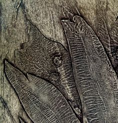 Sue Lowe 'Seed Studies' triptych collagraph print - detail showing textures