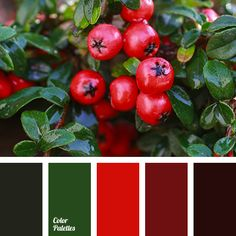 berries color, burgundy, contrast, contrasting color combination, crimson-red, dark green, dark green and burgundy, green