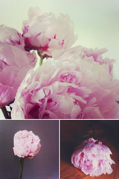 Peony study. i do this myself most weekends with my weekly selection.