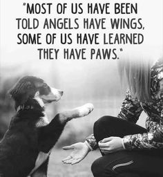 We would love to meet your angels. Call us today for more info * * * * Animal Lover Quotes, Puppy Quotes, I Love Dogs, Puppy Love, Animals And Pets, Cute Animals, Dog Rules, Love To Meet, Service Dogs