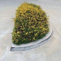 Pavement garden.