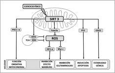 Evitar Acelerar metabolismo