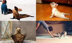 Leuk Yoga met je huisdier Yoga, Animals, Farm Gate, Animais, Animales, Animaux, Yoga Tips, Animal, Yoga Sayings