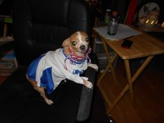 esCheck out my entry in Milk Bone's Halloween Pet Costume Contest. #HalloWOOF