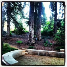 One of the many corners of the magical redwood grove in the UC Davis Arboretum. Perfect for weddings under 40 guests. www.reverendtan.com