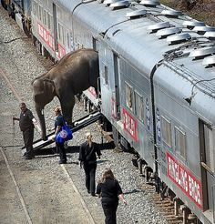Ringling Bros. Circus Train.   One of our oldest traveling shows from Baraboo, Wisconsin