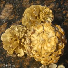 How to bleach your pinecones for an unusual beautiful effect in home décor