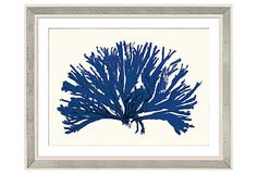 Miranda Corals, Blue 2 on OneKingsLane.com -- A reproduction giclée print of an original watercolor by English artist Miranda Baker who was inspired by her grandmother's collection of Victorian sea life and maritime artifacts.