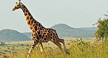 21-Day Tanzania, North to South to Beach | Moonlight Tours Expedition | Pulse | LinkedIn
