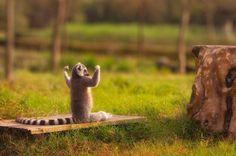15 animales que motivan a ejercitarse | La nube de algodón