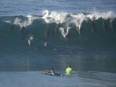 Dolphins caught the wave the surfers missed