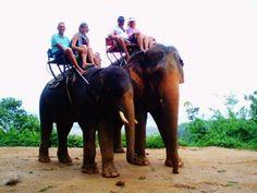 Elephant Riding in Phuket