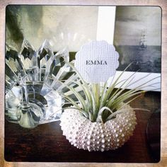 air plant party favors // place markers qty. 50