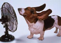 Verão pegando fogo e você não tem um ar condicionado em casa? Não tem problema, garimpamos 10 maneiras para amenizar esse sufoco.