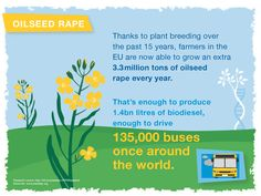Thanks to plant breeding over the past 15 years, farmers in the EU are now able to grow an extra 3.3 million tons of oilseed rape every year.