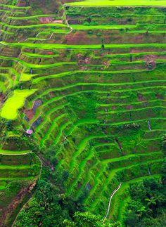 Banaue Philippines Terraced Rice Fields