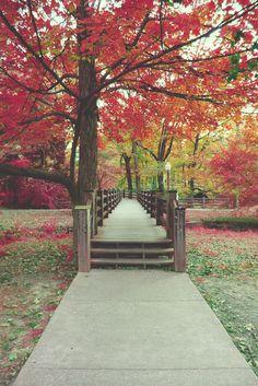 Fall is beautiful in Bloomington, Indiana. :)
