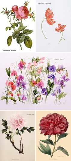@Nancy Spurling The buds might be Cabbage Roses--what do you think?       Bridal Blooms: Spring Garden Flowers