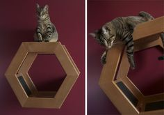 Neat wall-mounted cat structure idea from ModernCat.