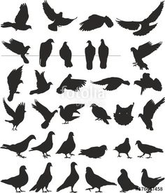 pigeon vector silhouettes bird - Buy this stock vector and explore similar vectors at Adobe Stock Art Shed, Photo Images, Illustrations, Pigeon, Adobe Illustrator, Photos, Bird, Drawings, Silhouettes