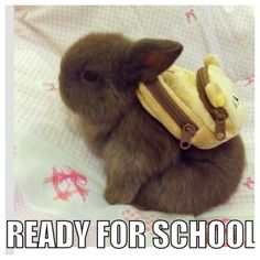School ewwwwww school