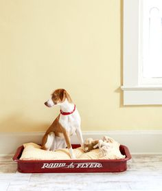 DIY a unique bed for your dog by removing the wheels from a little red wagon and adding a pillow insert. Your pet will have the most charming sleeping quarters around!