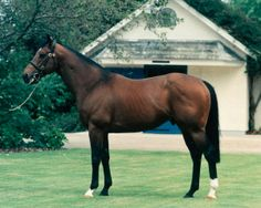 Danehill(1986)(Colt) Danzig- Razyana By His Majesty. 3x3 To Natalma, 5x5 To Hyperion. 9 Starts 4 Wins 1 Second 2 Thirds. Won Sprint Cup(Eng-1), Orrey And Cork S(Eng-3), 3rd 2000 Guineas(Eng-1), July Cup(Eng-1). Leading Sire In Australia In 1995, 1996,1997,2000,2001,2002,2003, 2004 & 2005. Leading Sire In England & Ireland In 2005,2006 & 2007. Leading Sire In France In 2001 & 2007. Leading Broodmare Sire In Eng & Ire. In 2012. Sire Of 347 SW, Most All Time. Died In 2003.