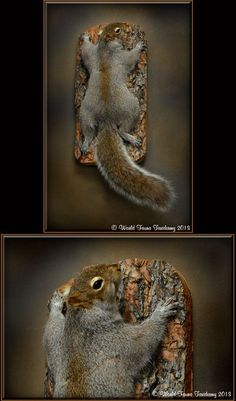 natural squirrel taxidermy - Google Search