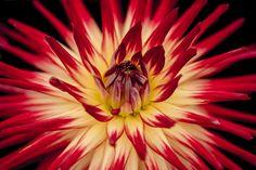 New free stock photo of nature petals plant - Stock Photo