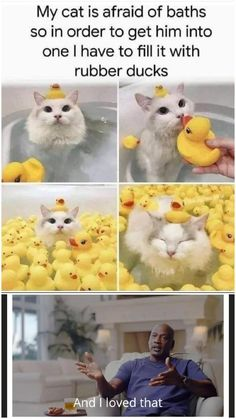 Cute Animal Memes, Cute Animals, Meme Caption, Rubber Duck, Interesting Animals, Clean Memes, All The Things Meme, Best Memes, Best Funny Pictures
